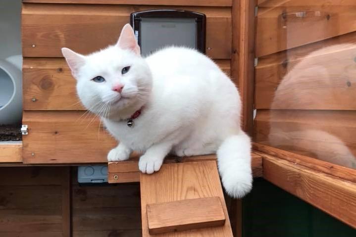 Happy white cat